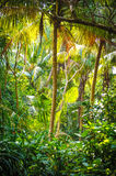 Palm leaves.Tropical Forest on the island in indian ocean.Beautiful landscape of humid tropical jungle. Tropical forest. Palm leaves.Tropical Forest on the Royalty Free Stock Images