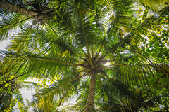Palm leaves.Tropical Forest on the island in indian ocean.Beautiful landscape of humid tropical jungle. Tropical forest. Palm leaves.Tropical Forest on the Stock Image