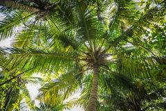 Palm leaves.Tropical Forest on the island in indian ocean.Beautiful landscape of humid tropical jungle. Tropical forest. Palm leaves.Tropical Forest on the Royalty Free Stock Photography