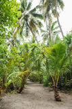 Palm leaves. Tropical Forest on the island in Indian ocean. Beautiful landscape of humid tropical jungle. Tropical forest. Palm leaves. Tropical Forest on the Royalty Free Stock Photo