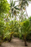 Palm leaves. Tropical Forest on the island in Indian ocean. Beautiful landscape of humid tropical jungle. Tropical forest. Palm leaves. Tropical Forest on the Stock Images
