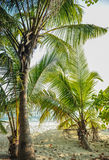 Palm leaves. Tropical forest on the island in Indian ocean. Beautiful landscape of humid tropical jungle. Tropical forest. Palm leaves. Tropical forest on the Royalty Free Stock Images