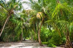 Palm leaves. Tropical forest on the island in Indian ocean. Beautiful landscape of humid tropical jungle. Tropical forest. Palm leaves. Tropical forest on the Stock Photos