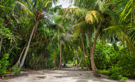 Palm leaves. Tropical forest on the island in Indian ocean. Beautiful landscape of humid tropical jungle. Tropical forest. Palm leaves. Tropical forest on the Royalty Free Stock Photos