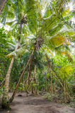 Palm leaves. Tropical forest on the island in Indian ocean. Beautiful landscape of humid tropical jungle. Tropical forest. Palm leaves. Tropical forest on the Stock Image