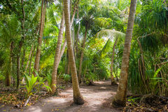 Palm leaves. Tropical forest on the island in Indian ocean. Beautiful landscape of humid tropical jungle. Tropical forest. Palm leaves. Tropical forest on the Stock Photography