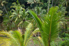 Palm leaves in the tropics after rain Royalty Free Stock Image