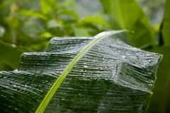 Palm leaves in the tropics after rain Royalty Free Stock Images