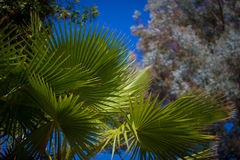 Palm leaves under a clear blue sky. A vertical image of palm leaves with trees under a clear blue sky Stock Photos