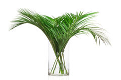 Palm leaves in the vase Stock Photo
