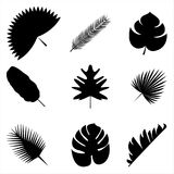 Palm leaves Vector illustration. Exotic and tropical plants Set of different palm leaves silhouettes isolated on white background Royalty Free Stock Photography