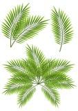 Palm leaves stock illustration