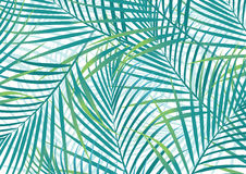 Palm leaves. Vector illustration of some abstract tropical palm leaves Stock Photos