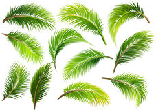 Palm leaves. Vector royalty free illustration