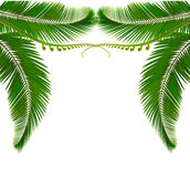 Palm leaves on white background. vector illustration