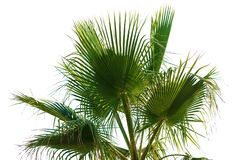 Palm leaves on a white background Stock Photo