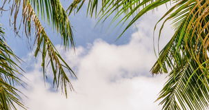 Palm leaves on white clouds. Timelapse of tropical tree on clouds background. Palm leaves on blue sky and white clouds. 4k Timelapse of tropical tree on clouds stock video footage