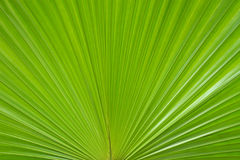 Palm left. Palm leafs in the forest Stock Photo