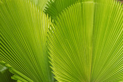 Palm left. Palm leafs in the forest Stock Photos