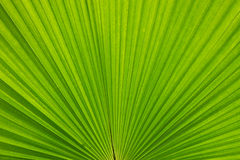 Palm left. Palm leafs in the forest Stock Images