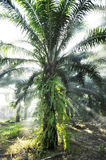 Palm Light Outdoor Fog Farm Day Royalty Free Stock Photos