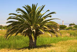 Palm with lighthouse in the background Royalty Free Stock Images