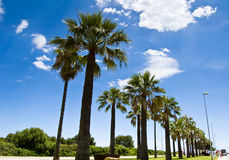 Palm-lined 1. Beautiful palm-lined street under blue sky Stock Photo