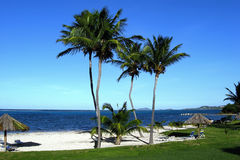 Palm Lined Island Beach. View of Caribbean Ocean with thatched umbrellas and palm trees from a resort on St. Croix, US Virgin Islands Royalty Free Stock Photography