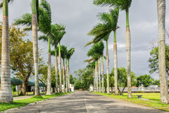 Palm Lined Road. Palm lined driveway with fence and park benches Royalty Free Stock Images