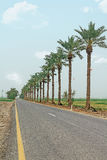 Palm-lined road. In Israel Stock Image