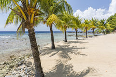 Palm Lined Roatan Beach Royalty Free Stock Photography