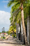 Palm Lined Sidewalk. Stock Photography
