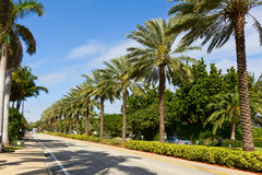 Palm lined street. In Florida Stock Photography