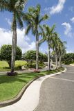 Palm lined street. Tree lined street in tropical location Royalty Free Stock Photos