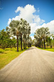 Palm lined street. A garden filled with palm trees Royalty Free Stock Images
