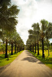 Palm lined street stock images