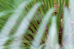 Palm linie Obrazy Stock