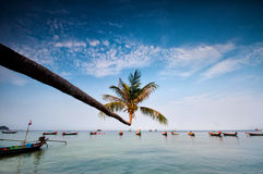 Palm and boats on tropical beach, Thailand. Palm and longtail boats on tropical beach. Ko Tao island, Thailand Stock Photo