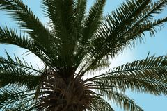 Palm with lush green foliage. On sunny day stock images