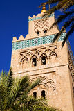 Palm in maroc africa  minaret religion and the blue     sky Royalty Free Stock Photo
