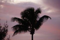 Palm met bewolkte hemel Stock Foto