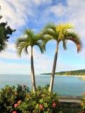 Palm met een blauwe hemel en een witte wolkenachtergrond Royalty-vrije Stock Foto