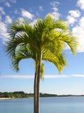 Palm met een blauwe hemel en een witte wolkenachtergrond Stock Afbeeldingen