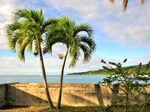 Palm met een blauwe hemel en een witte wolkenachtergrond Royalty-vrije Stock Afbeelding