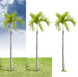 palm met geïsoleerd op drie versieachtergrond royalty-vrije stock afbeelding