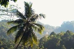 Palm met helder zonnig licht Stock Afbeeldingen