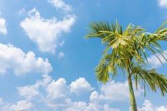 Palm met hemel en clounds Royalty-vrije Stock Afbeeldingen