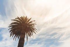 Palm met het heldere zon glanzen en blauwe hemel Royalty-vrije Stock Fotografie