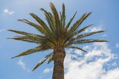 Palm met het heldere zon glanzen en blauwe hemel Stock Fotografie