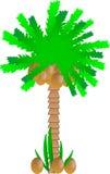Palm met kokosnoten stock illustratie